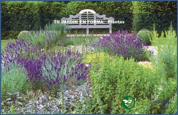 Plantas aromaticas y medicinales - Plantas aromaticas jardin ...