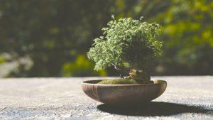 El Musgo sphagnum y su uso para plantas ornamentales