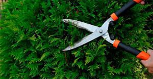 Poda y tala de jardines