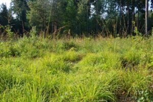 Controlar las malas hierbas, indispensable antes de abonar el césped