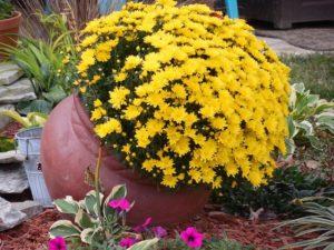 La ceramica y el barro, excelente opción para Macetas y Jardineras