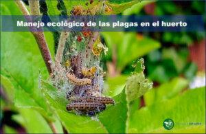 Manejo ecológico de las plagas en el huerto