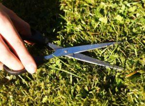 mantenimiento y reparación del césped en primavera