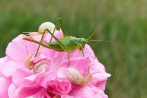 Control de plagas y enfermedades en primavera