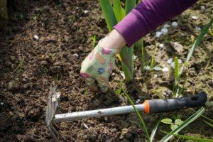 Que cosechar en primavera