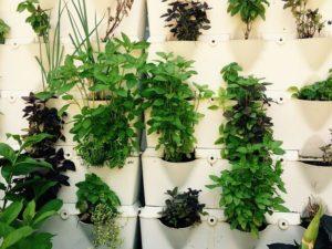 Jardín vertical en macetas