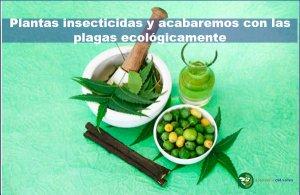 Plantas insecticidas