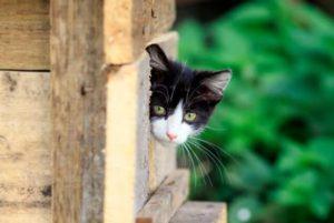 casitas de madera para nuestras mascotas