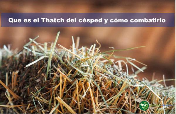 thatch del césped