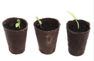 Césped ecológico en plantel