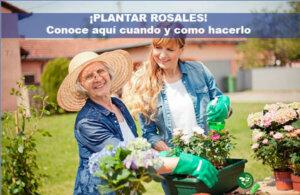 Plantar Rosales