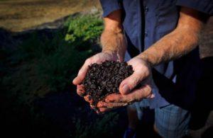 la fertilizaciòn en el cilantro