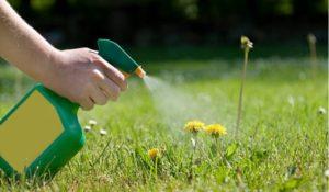 combatir malas hierbas con vinagre