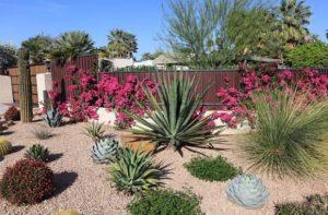 Jardín de bajo mantenimiento y xerojardinería que plantar