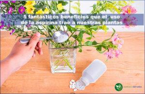 Uso de la aspirina en las plantas