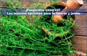 Fungicidas caseros principal