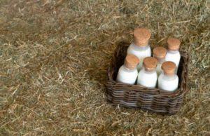 Fungicidas caseros la leche