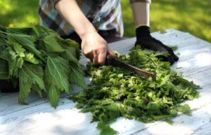 fungicidas caseros ortiga