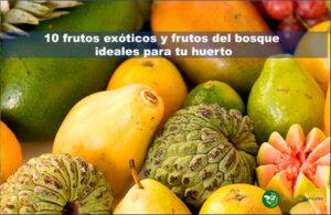 10 frutos exóticos y frutos del bosque