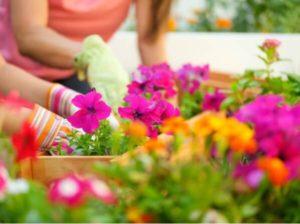 la levadura de cerveza dará vida a tus plantas en poco tiempo