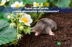 Topos en el jardín