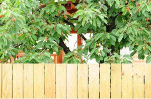 Decorar tu jardín con frutales color y aroma