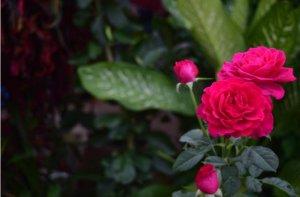 diciembre en el jardín plantas y flores