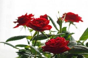 Tareas del jardín en febrero flores