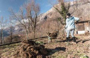 otras tareas del jardín en febrero