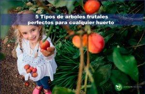 5 tipos de arboles frutales