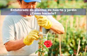 Entutorado de plantas de huerto y jardín