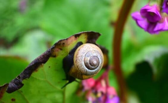 Julio tareas del jardín para el manejo fitosanitario