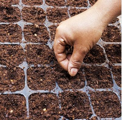 siembras a realizar en julio tareas del jardín