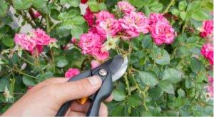 tareas del jardín en agosto para nuestras flores