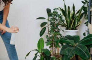 tareas del jardín en agosto plantas de interior