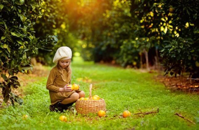 Recolección en las tareas del jardín en noviembre