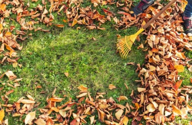 Tareas del jardín en noviembre mantenimiento